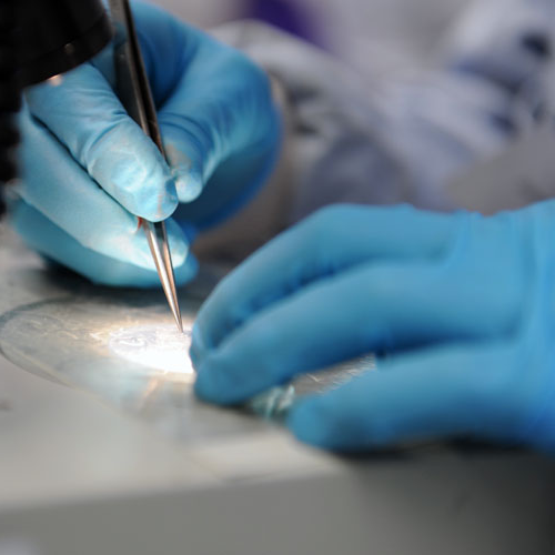 close up of blue-gloved hands holding tweezers, analysing a sample in a dish, in a lab